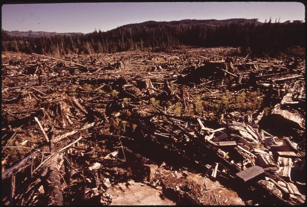 "[1972; ""A CLEAR-CUT AND BURNED-OVER HILLSIDE ONE MILE FROM THE ENTRANCE TO THE HOH RAIN FOREST. ALTHOUGH AESTHETICALLY UNPLEASING, THIS IS BASICALLY GOOD FORESTRY PRACTICE. THE SLASH IS NOT TOO THICK AND WILL DECOMPOSE FAIRLY RAPIDLY"" Image from Wikimedia Commons]"